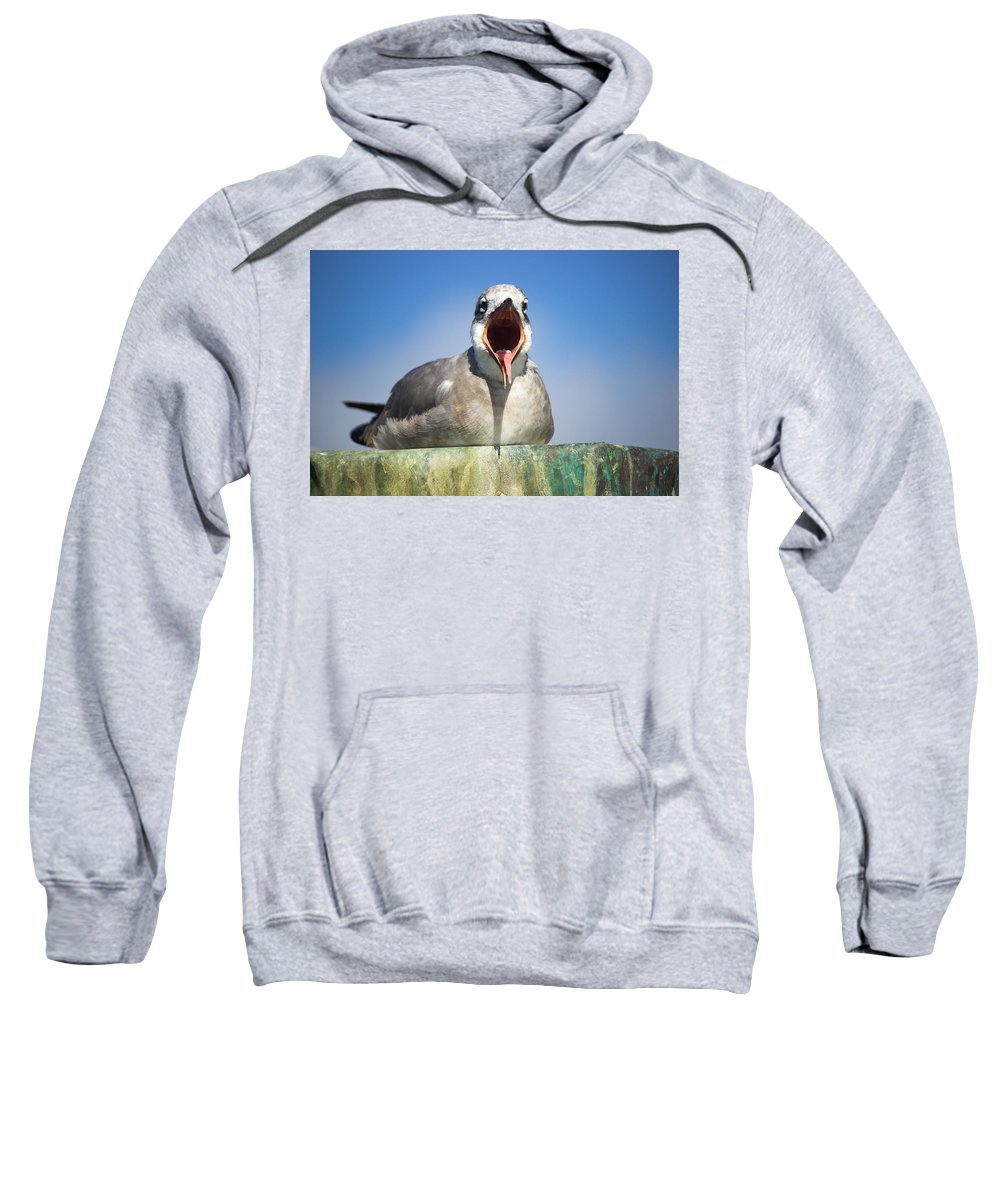 Seagull Sweatshirt featuring the photograph Feed Me by Mayra Pau
