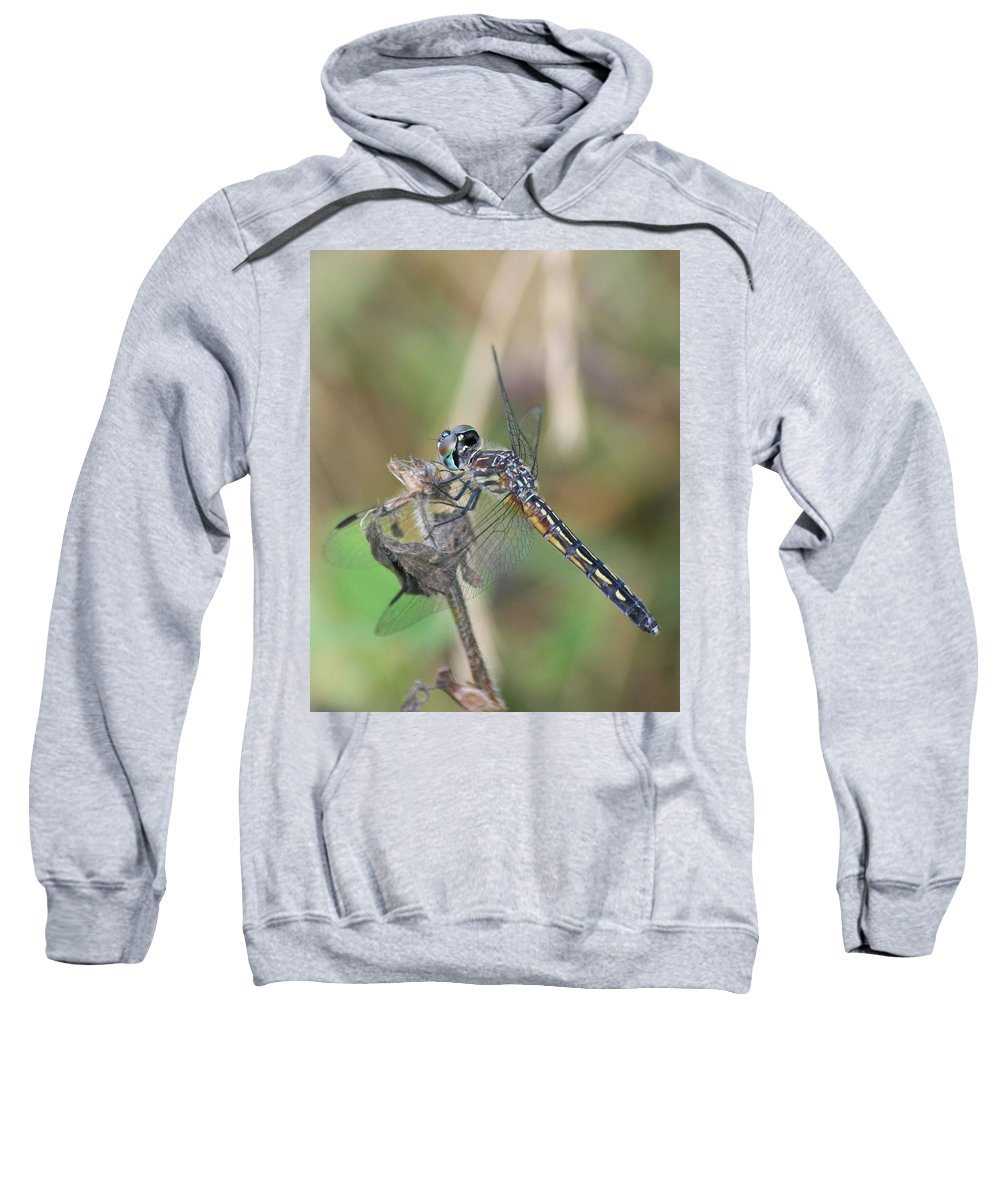 Blue Dasher Sweatshirt featuring the photograph Female Blue Dasher In July by Neal Eslinger