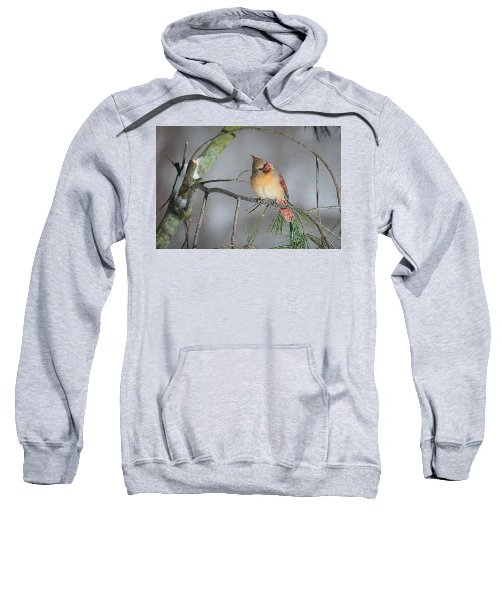 Female Sweatshirt featuring the photograph Female Cardinal by Everet Regal