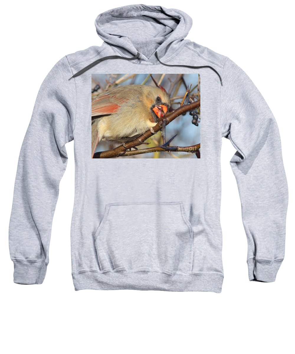 Wildlife Sweatshirt featuring the photograph Thorns And Berries - Cardinal by Robert Frederick