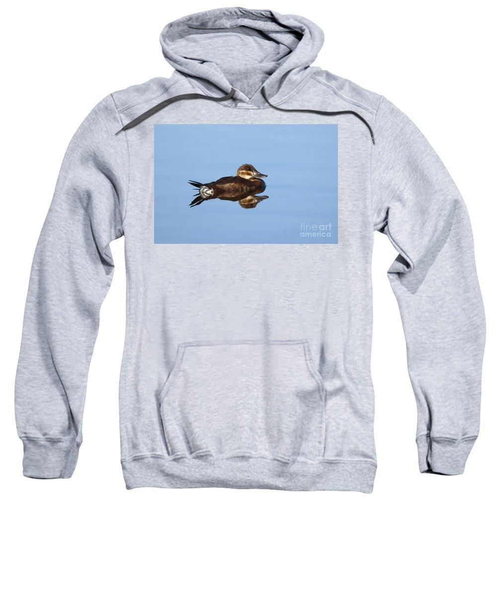 Fauna Sweatshirt featuring the photograph Female Ruddy Duck Oxyurus Jamaicensis by Anthony Mercieca