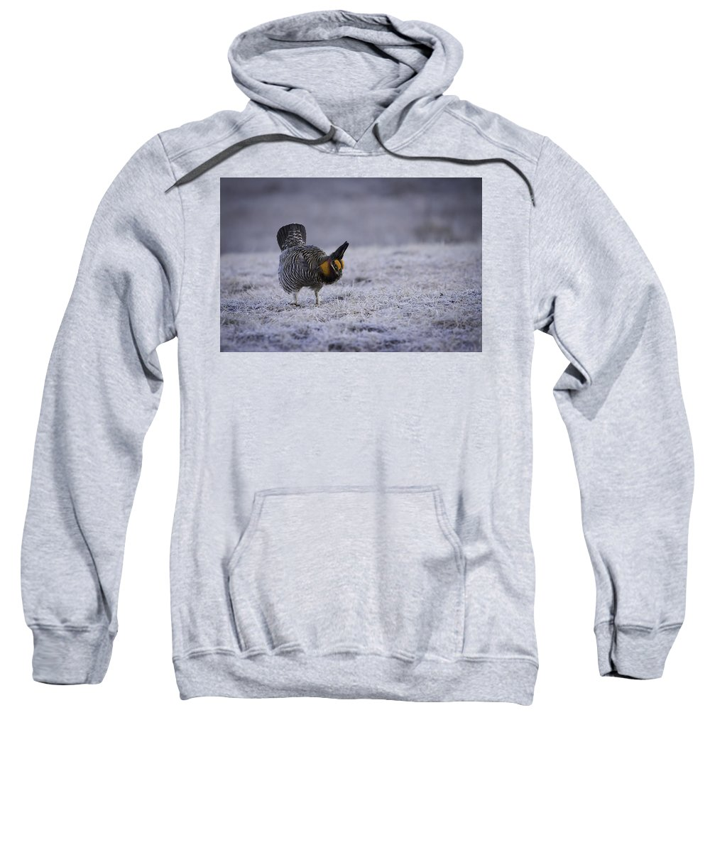Prairie Chicken Sweatshirt featuring the photograph First Light 2 by Thomas Young