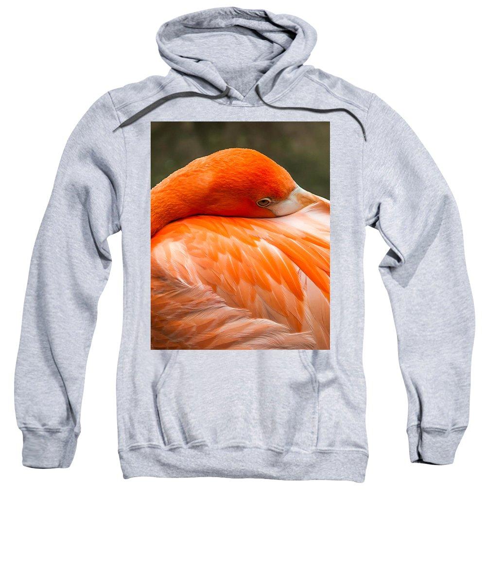 Alert Sweatshirt featuring the photograph Flamingo by Sharon Meyer