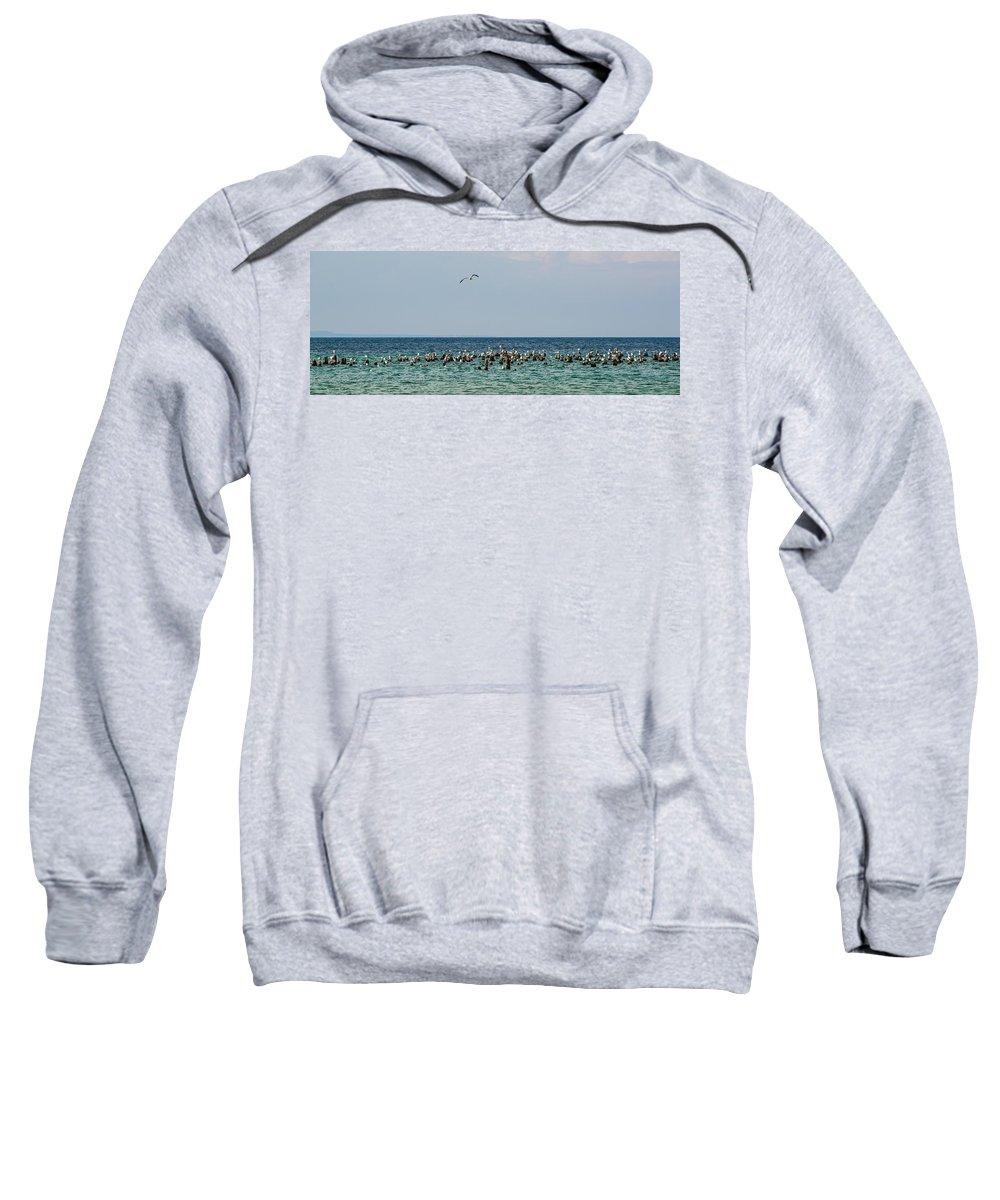 Michigan Sweatshirt featuring the photograph Flock Of Seagulls by Sebastian Musial