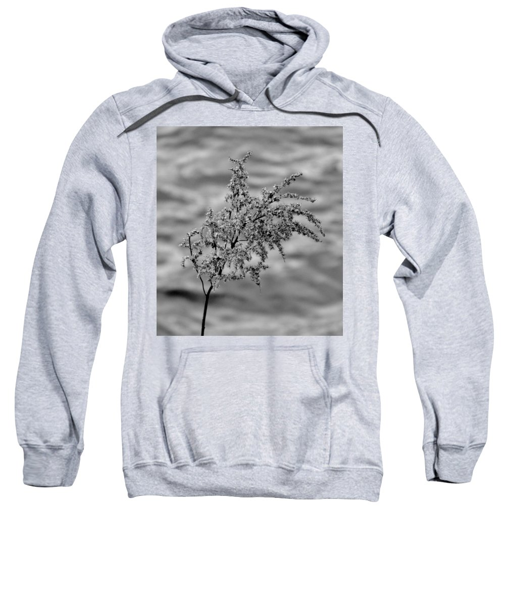 Black And White Sweatshirt featuring the photograph Flower Weed by Michele Nelson