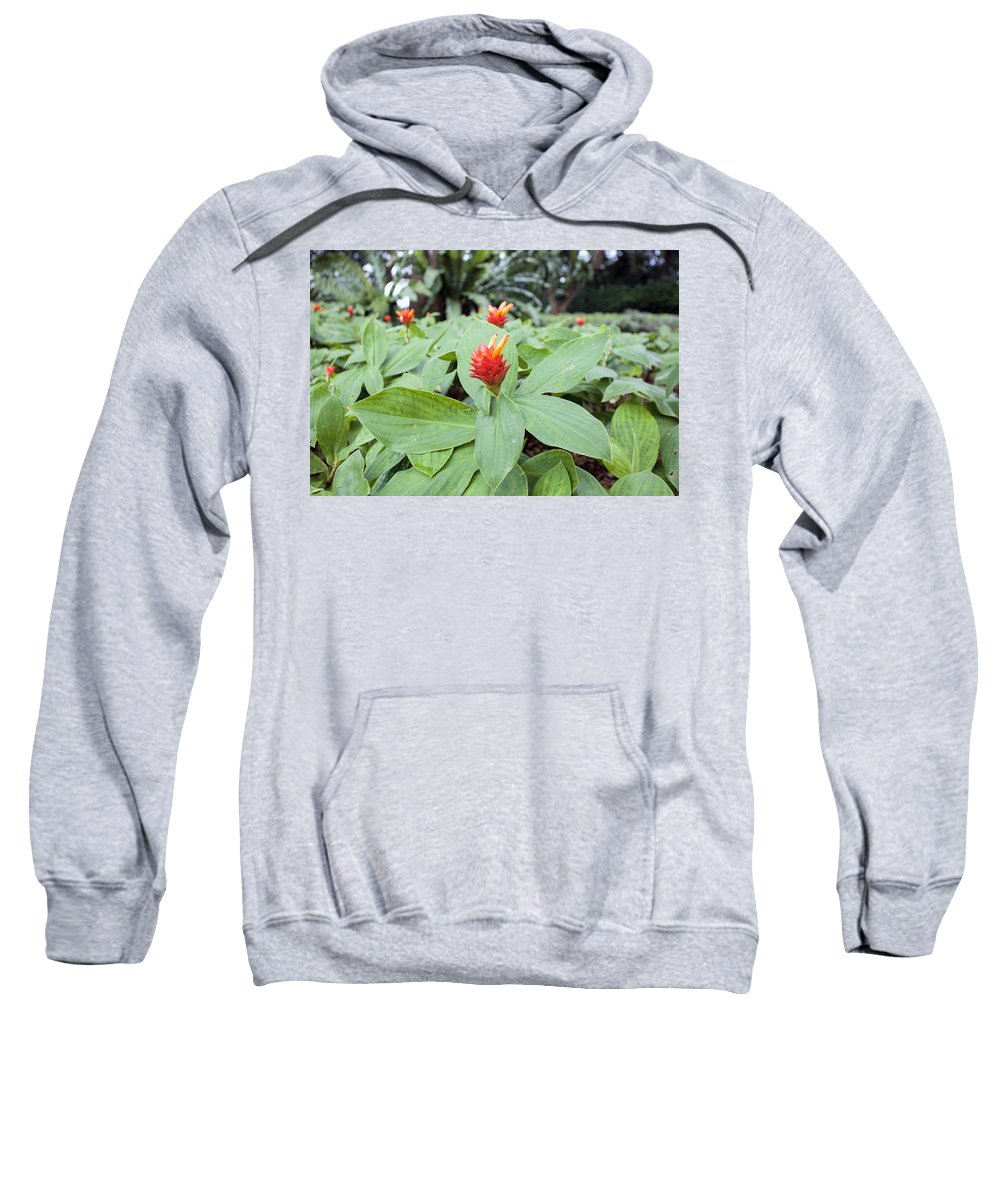 Ginger Sweatshirt featuring the photograph Flowering Red Ginger Plant by Jit Lim