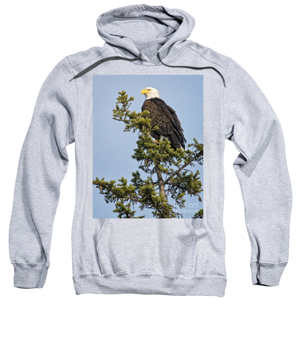 Eagles Sweatshirt featuring the photograph Focused by Claudia Kuhn