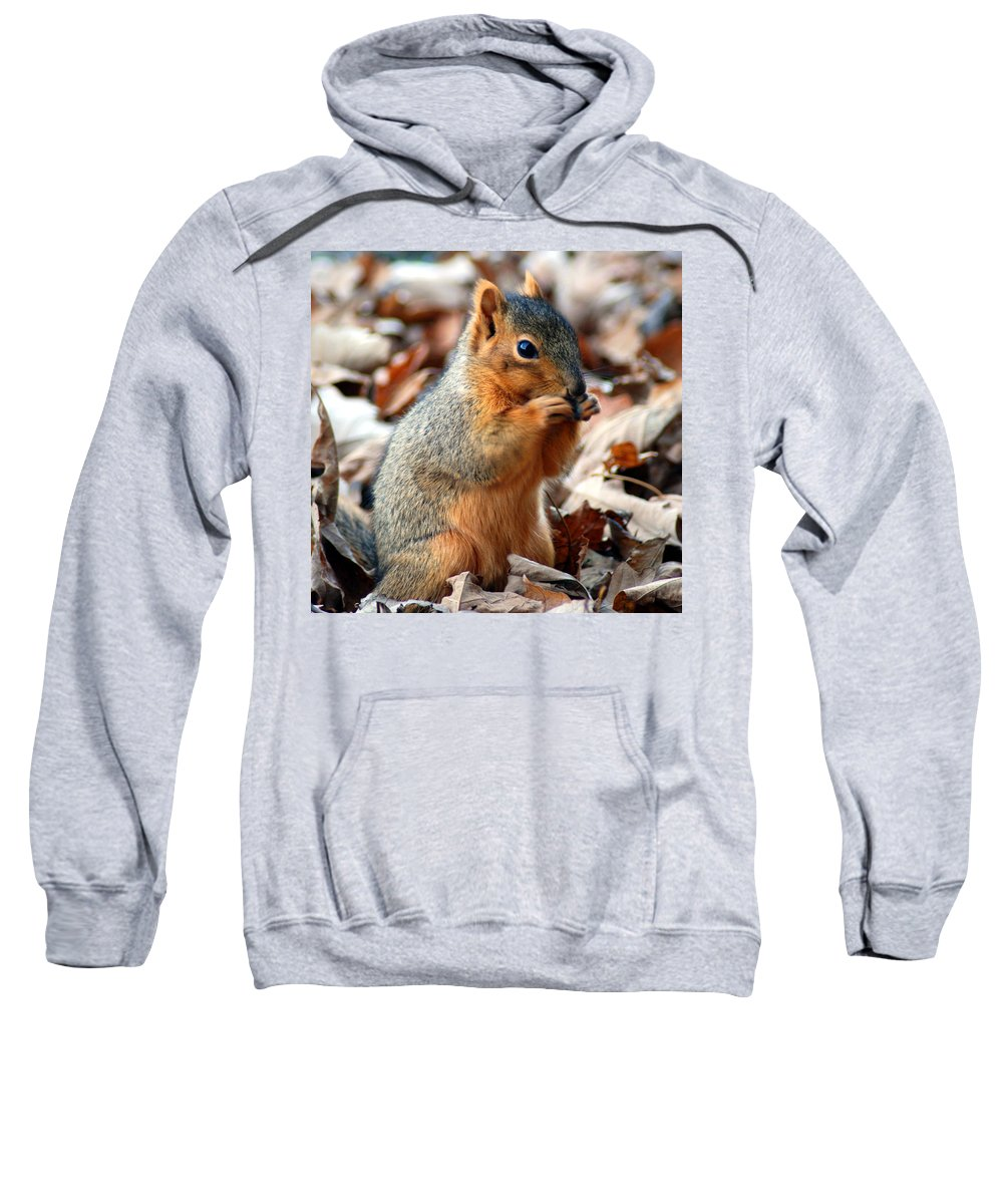 Squirrel Sweatshirt featuring the photograph Foraging Through The Autumn Leaves by Optical Playground By MP Ray