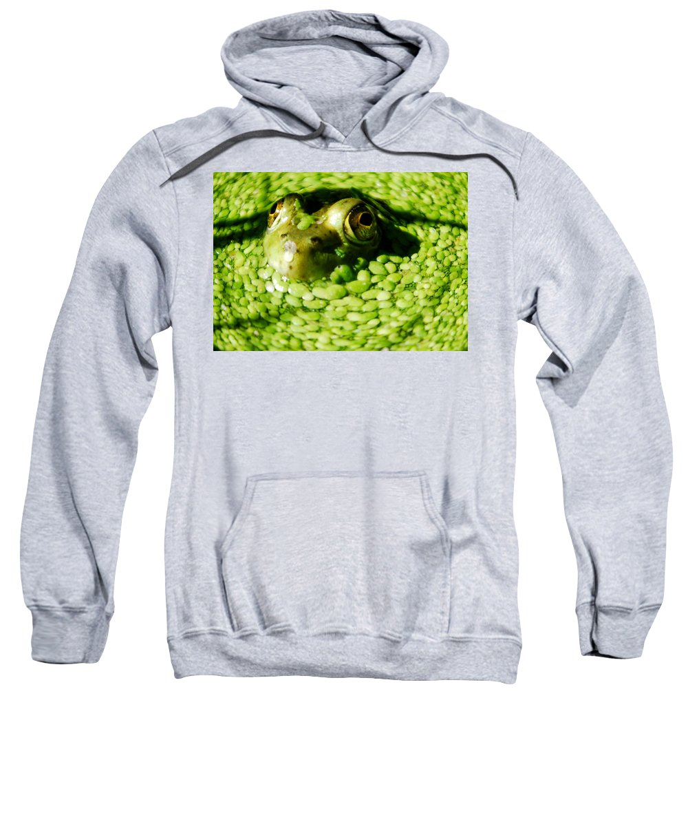 Green Algae Sweatshirt featuring the photograph Frog Eye's by Optical Playground By MP Ray