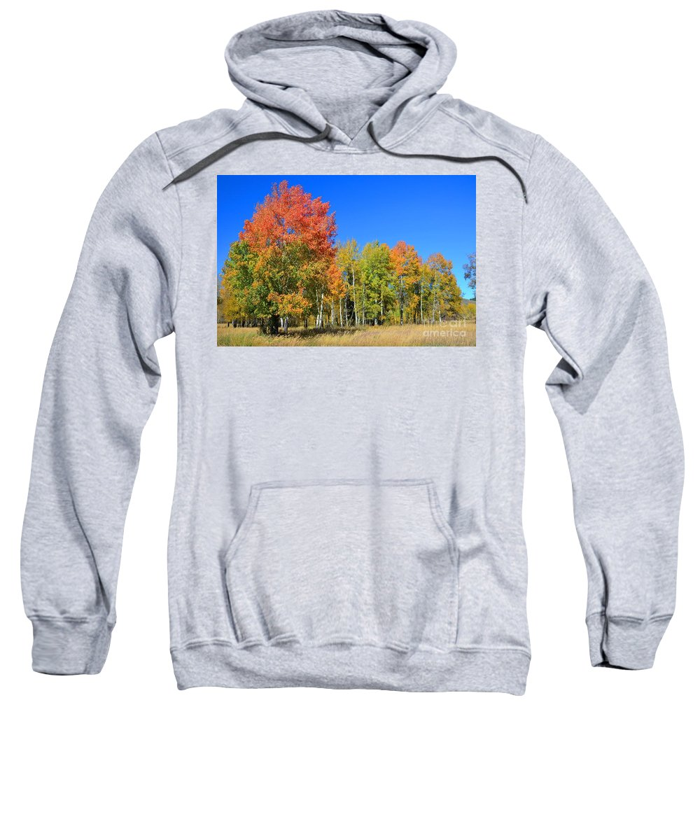 Aspens Sweatshirt featuring the photograph From The Top by Deanna Cagle