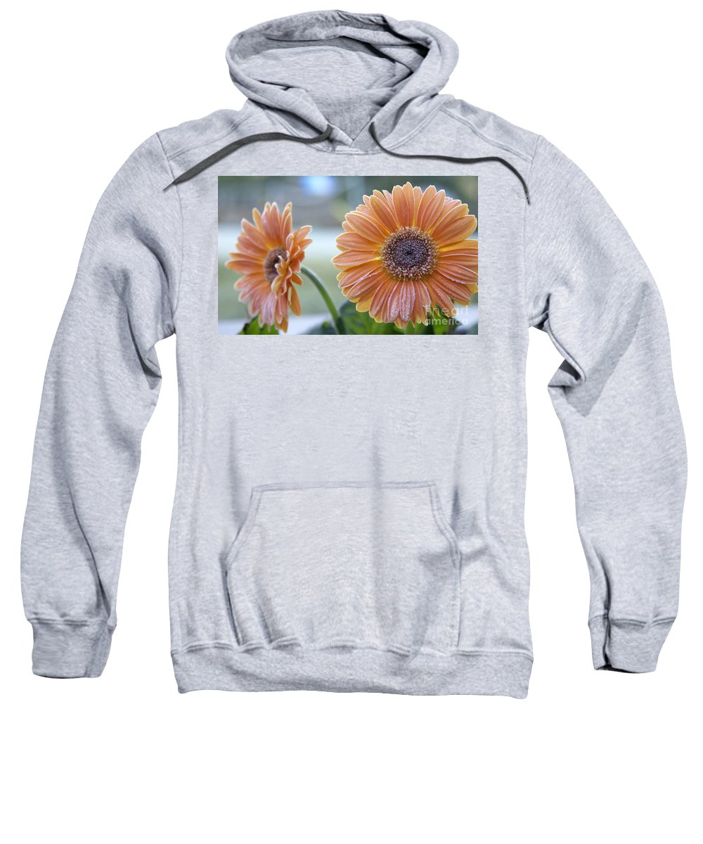 Frost Sweatshirt featuring the photograph Frosted Gerberas by SAJE Photography