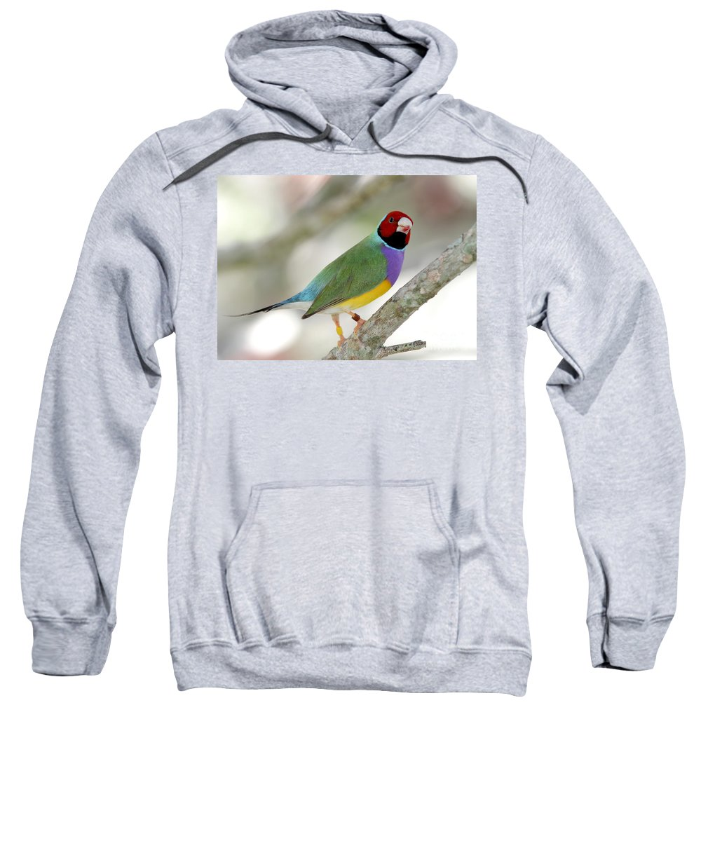 Landscape Sweatshirt featuring the photograph Full Of Color by Sabrina L Ryan
