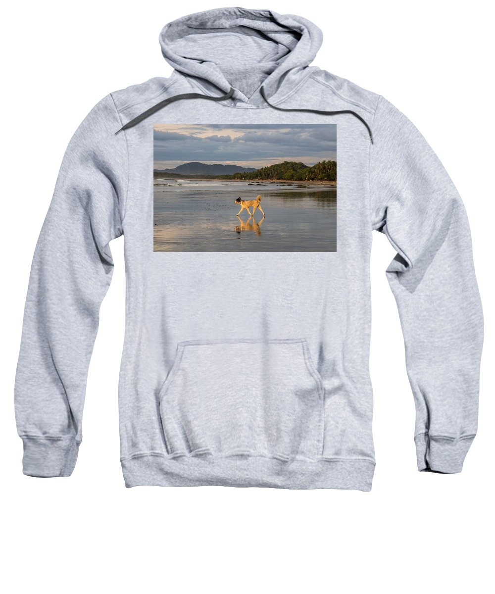 Tamarindo Sweatshirt featuring the photograph Furry Friend by Bailey Barry
