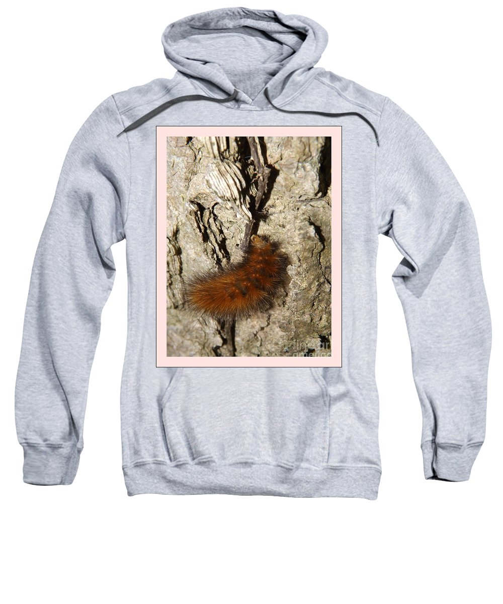 Tree Sweatshirt featuring the photograph Fuzzy Was He by Sara Raber