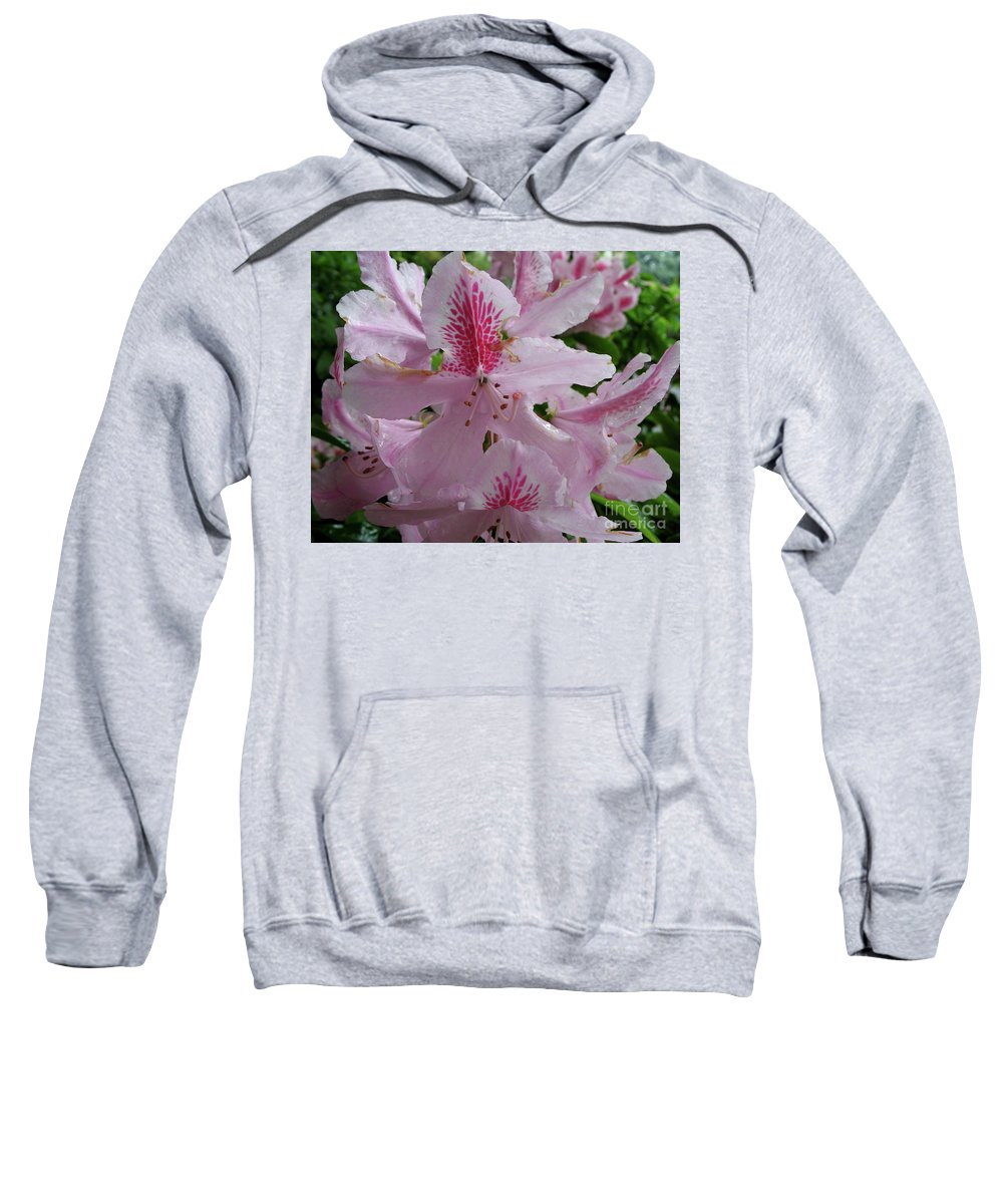 Rhododendron Sweatshirt featuring the photograph Garden Sunshine by Christiane Schulze Art And Photography