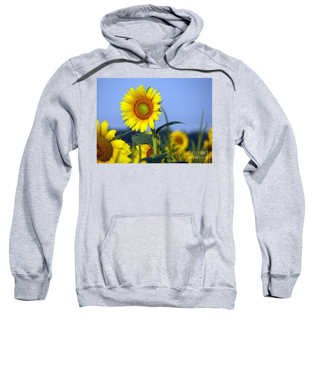 Sunflower Sweatshirt featuring the photograph Getting To The Sun by Amanda Barcon