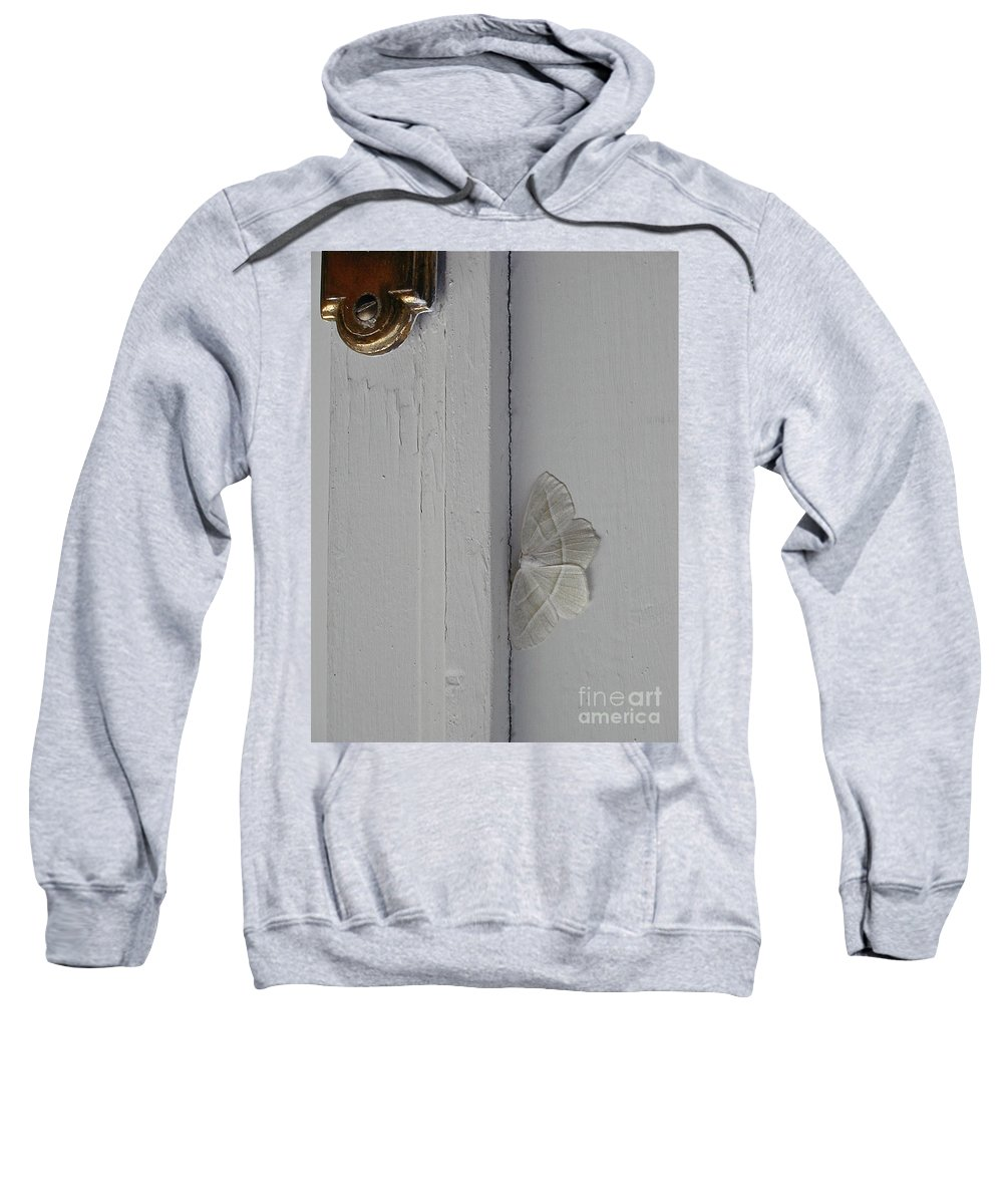 Insects Sweatshirt featuring the photograph Ghost Doorbell Moth by Christopher Plummer