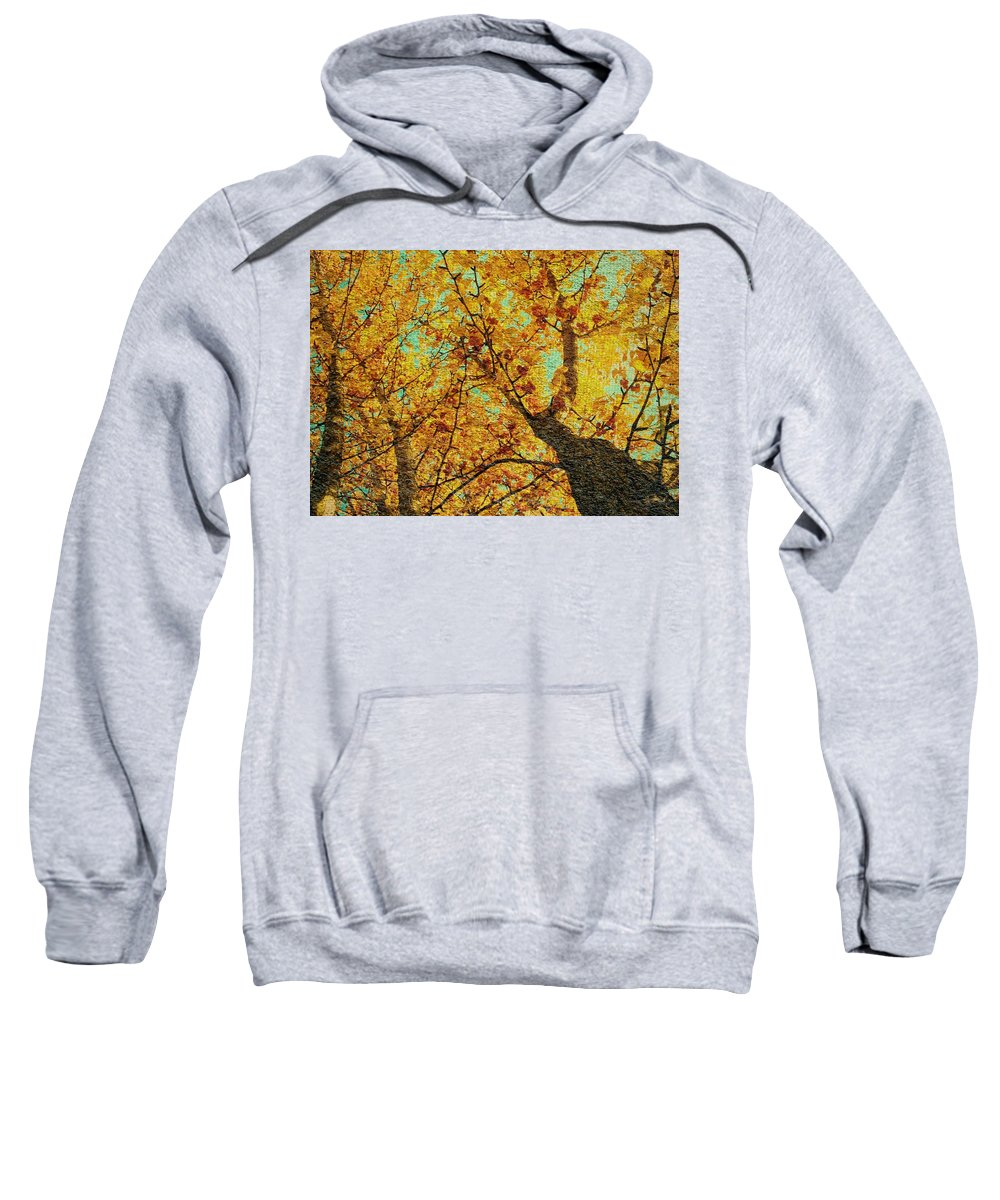 Ginkgo Sweatshirt featuring the photograph Ginkgo Tree by Chris Berry