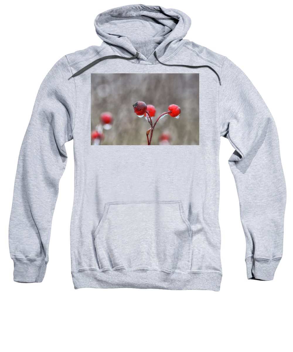 Rosehips Sweatshirt featuring the photograph Glazed by Susan Capuano