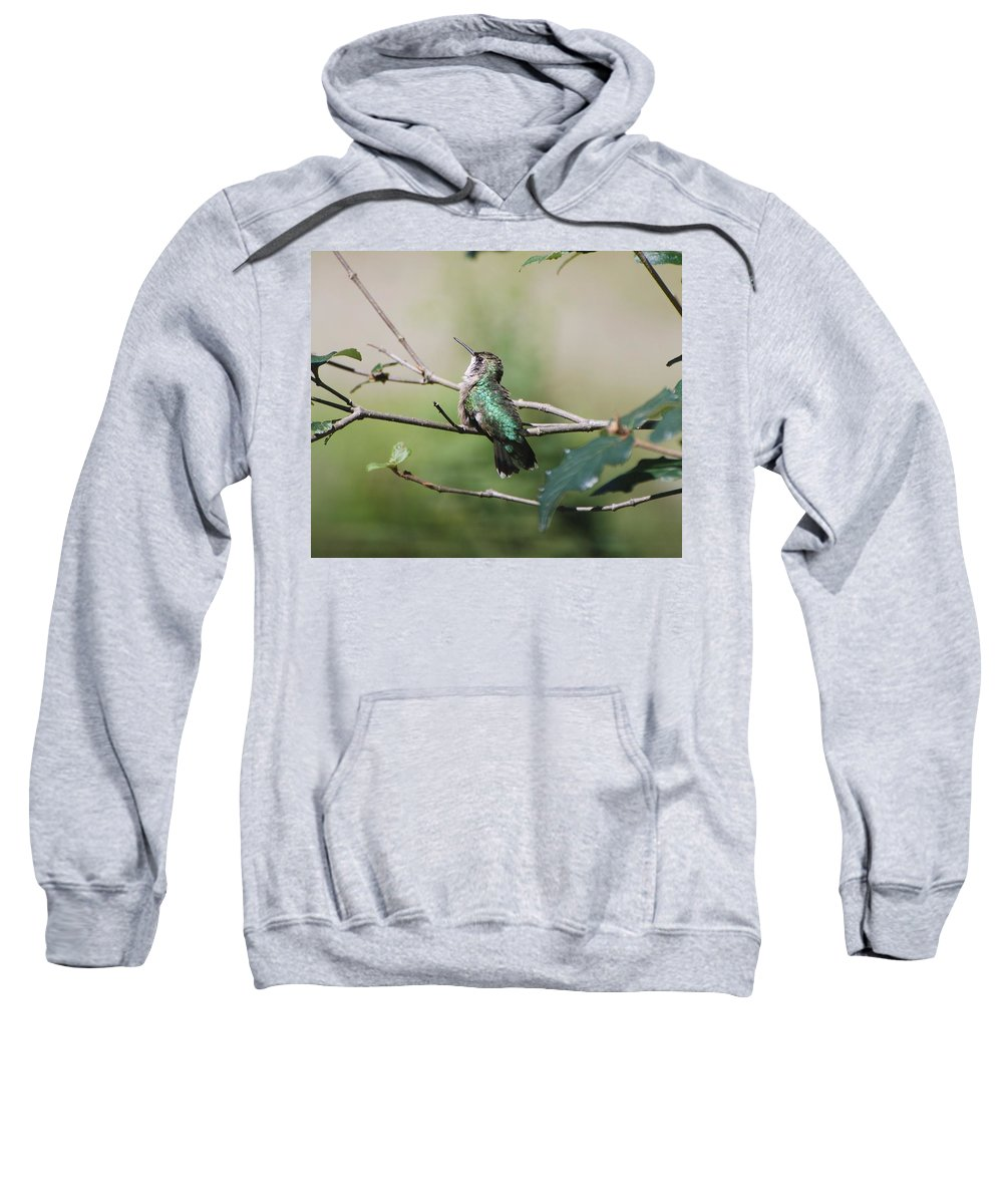 Hummingbird Sweatshirt featuring the photograph Glistening Hummer by Amy Porter