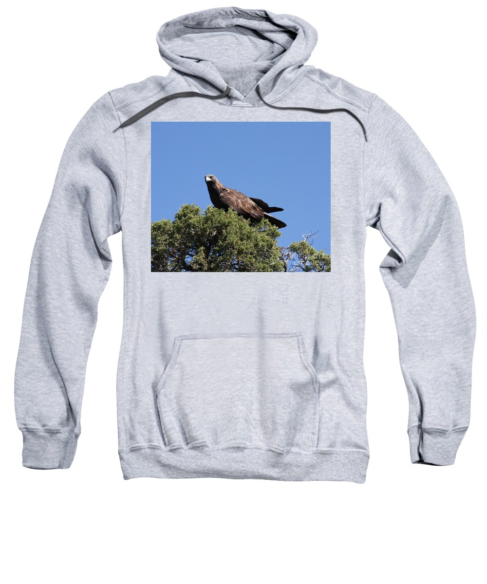 Golden Eagle Sweatshirt featuring the photograph Golden Eagle by Brandi Maher