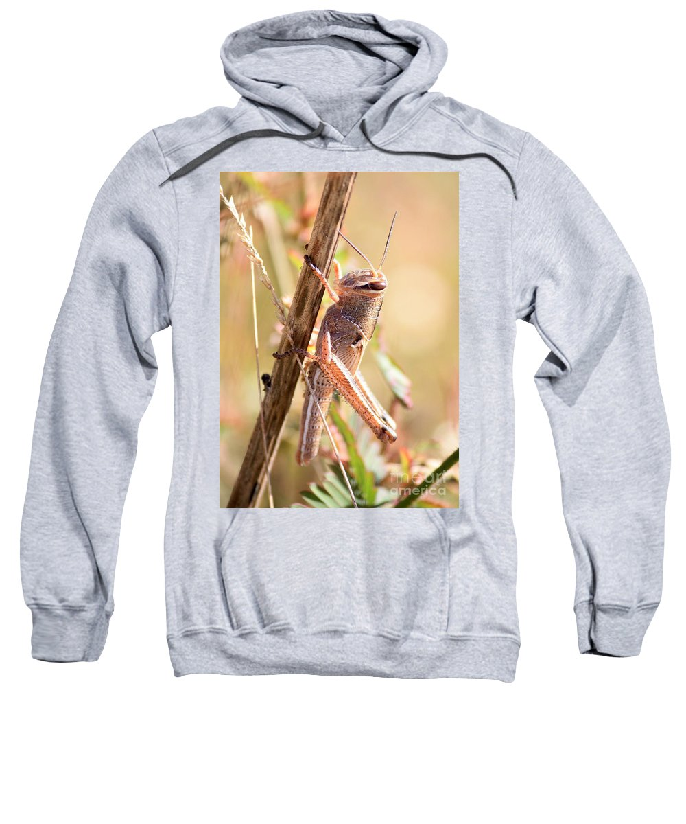 Grasshopper Sweatshirt featuring the photograph Grasshopper In The Marsh by Carol Groenen