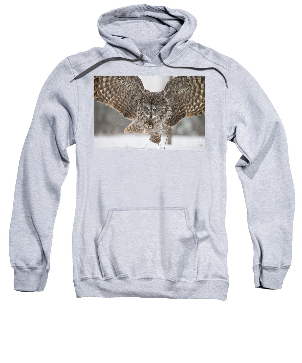 Great Gray Owl Sweatshirt featuring the photograph Great Gray Owl Pictures 634 by World Wildlife Photography