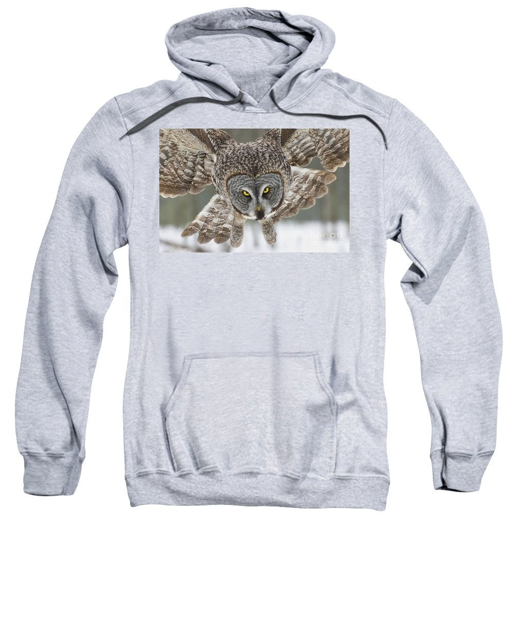 Great Gray Owl Sweatshirt featuring the photograph Great Gray Owl Pictures 648 by World Wildlife Photography