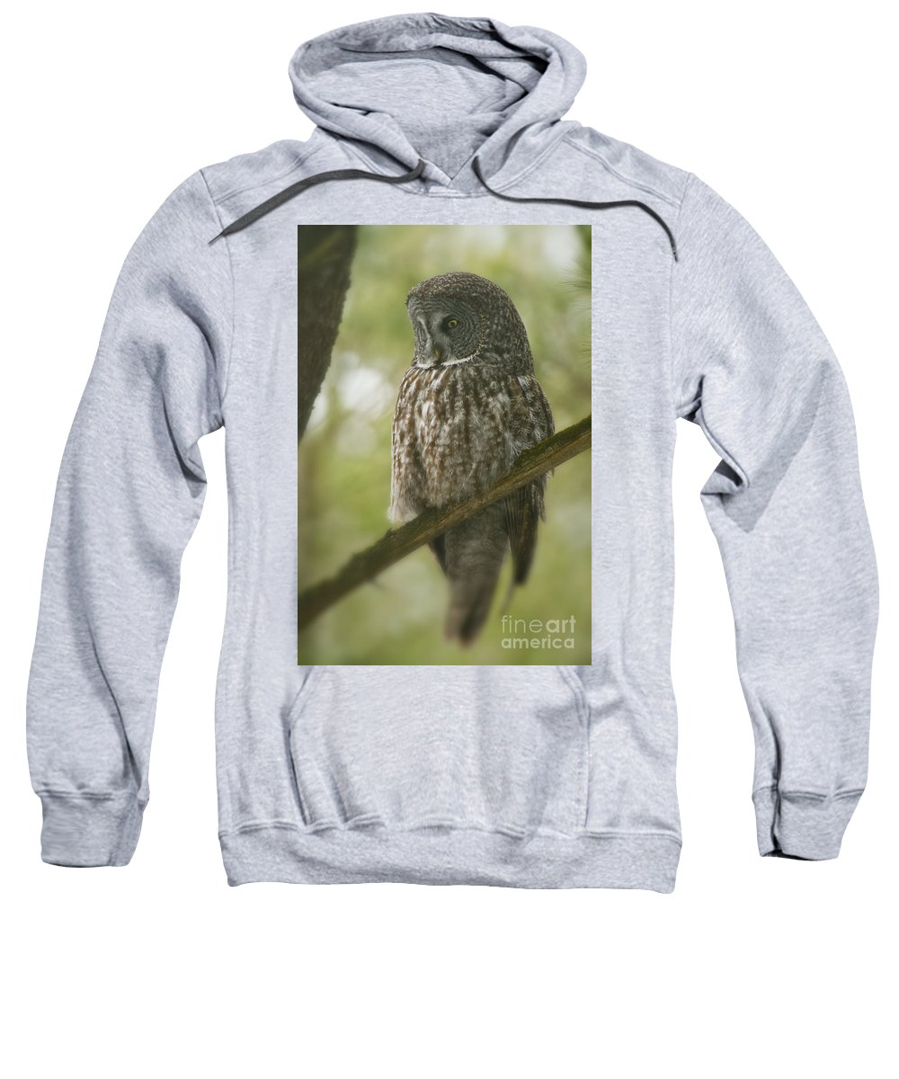 Great Gray Owl Sweatshirt featuring the photograph Great Gray Owl Pictures 823 by World Wildlife Photography