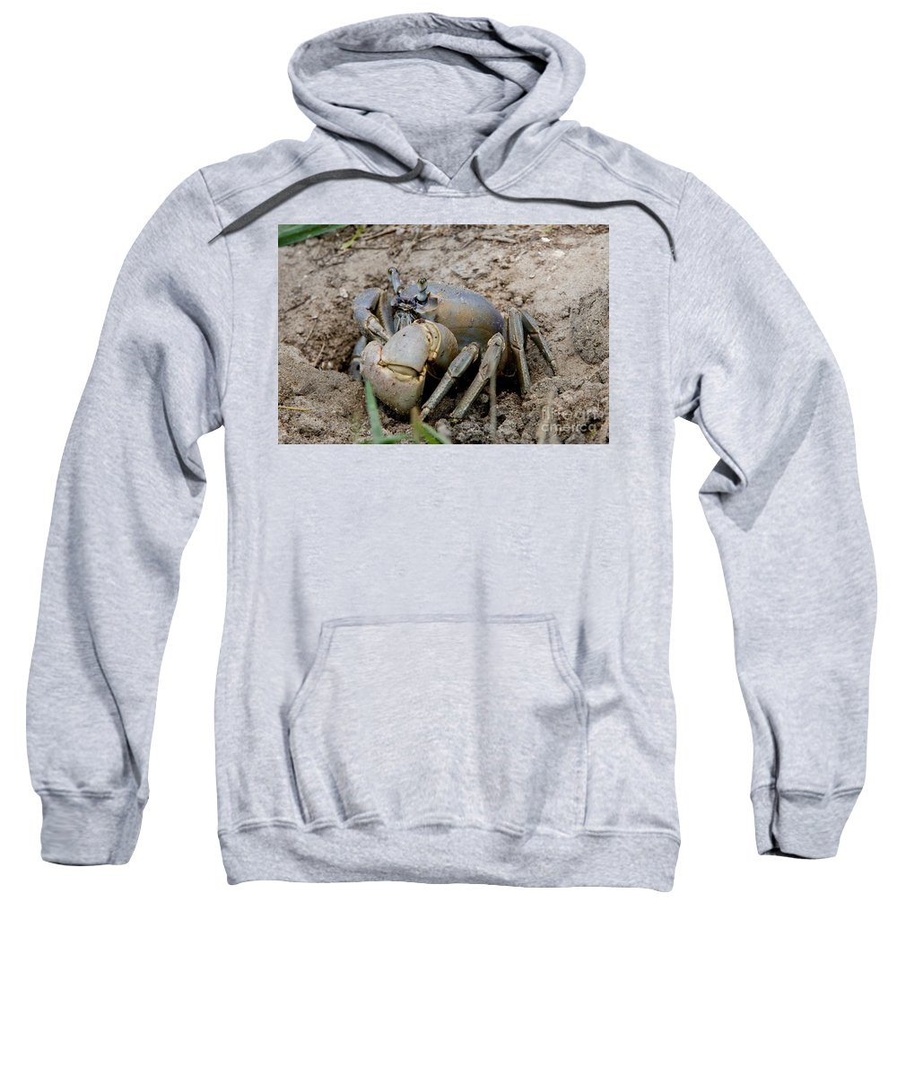 Great Land Crab Sweatshirt featuring the photograph Great Land Crab by Anthony Mercieca