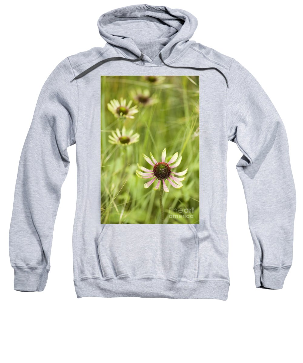 Green Envy Sweatshirt featuring the photograph Green Envy by Anne Gilbert