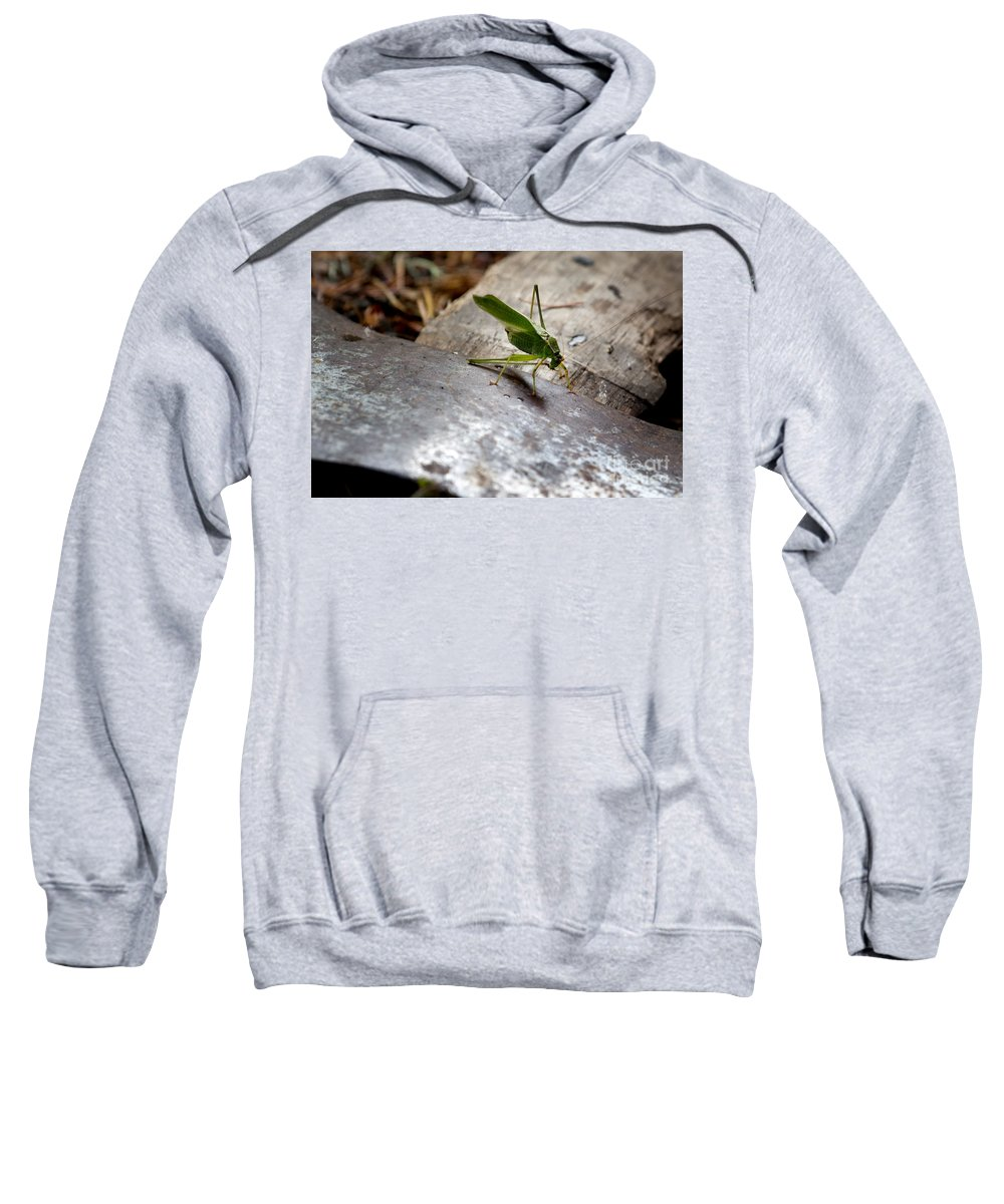 Grasshopper Sweatshirt featuring the photograph Green Grasshopper On Axe by Belinda Greb
