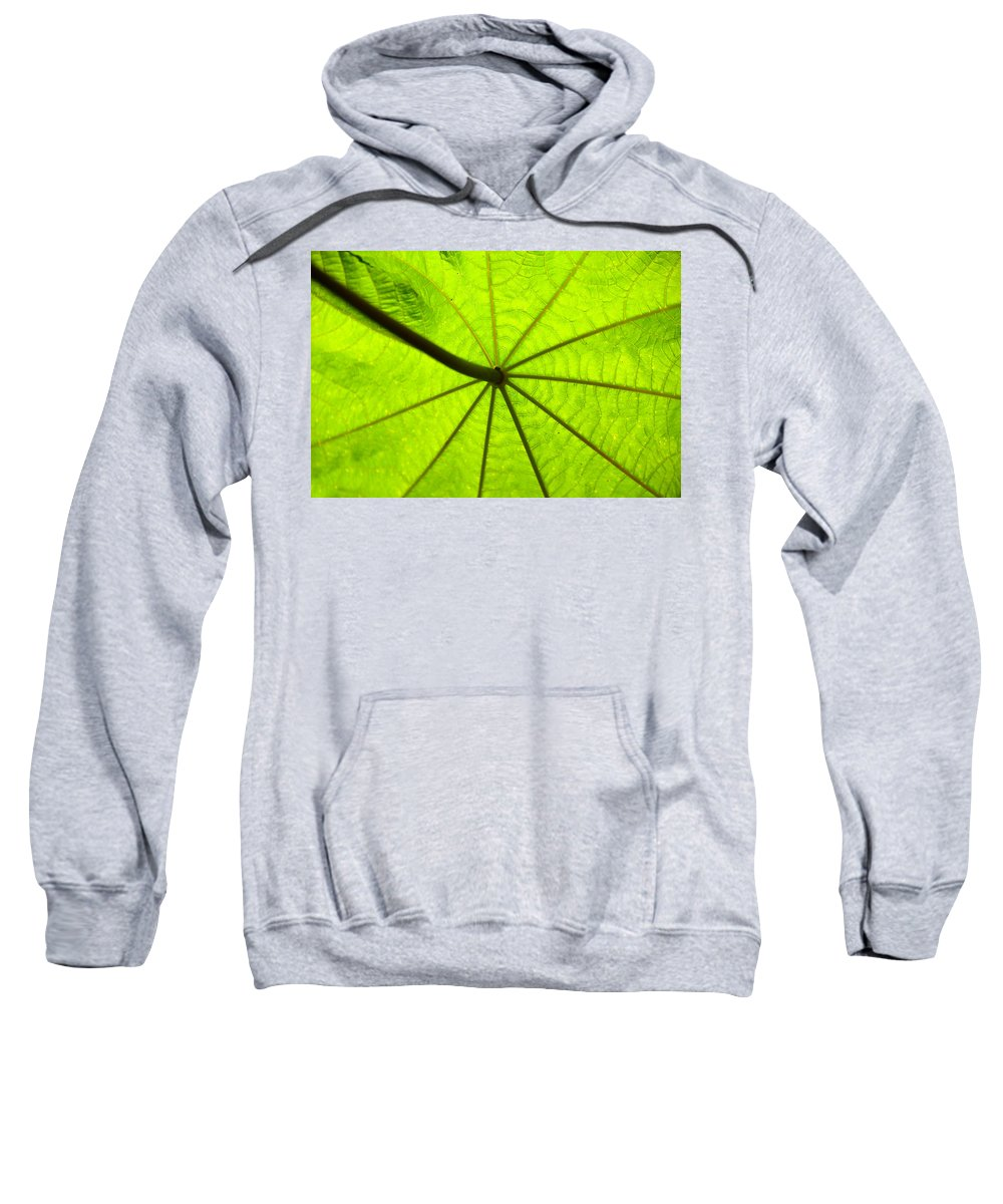 Green Sweatshirt featuring the photograph Green Growth by David Lee Thompson