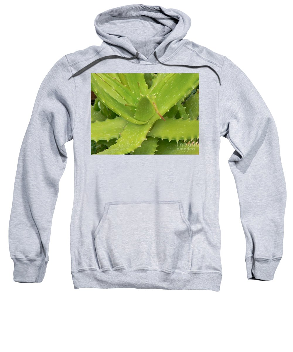 Succulents Sweatshirt featuring the photograph Green Succulent by Rincon Road Photography By Ben Petersen