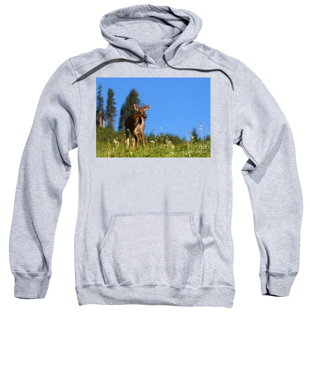 Buck Sweatshirt featuring the photograph Greener Fields by Mike Dawson