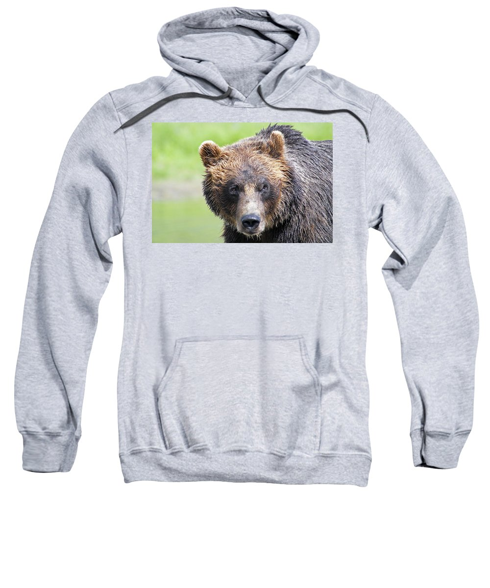 Alaska Sweatshirt featuring the photograph Grizzly Bear by Kyle Lavey