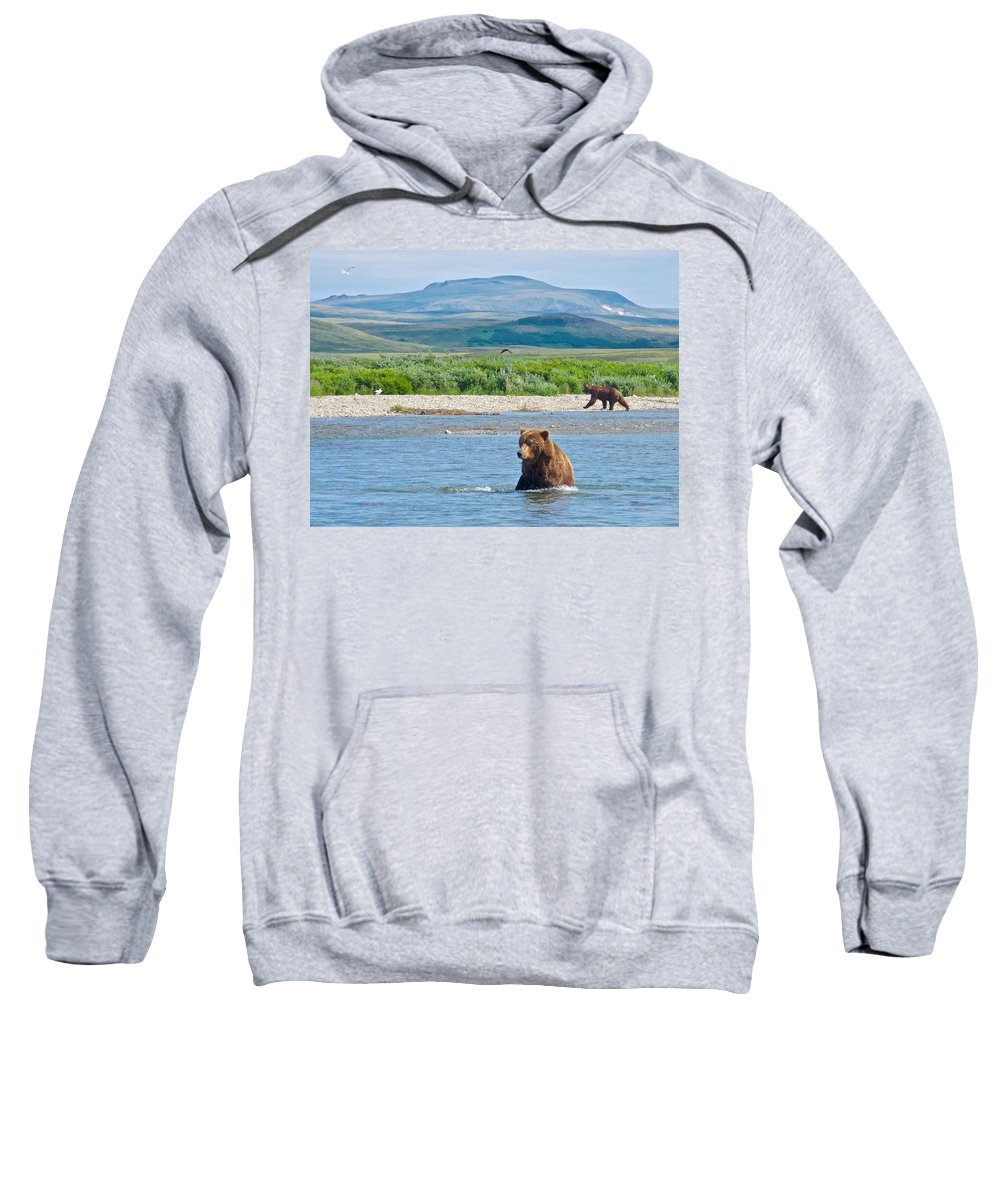 Grizzly Bears In Moraine River Sweatshirt featuring the photograph Grizzly Bears In Moraine River In Katmai National Preserve-ak by Ruth Hager