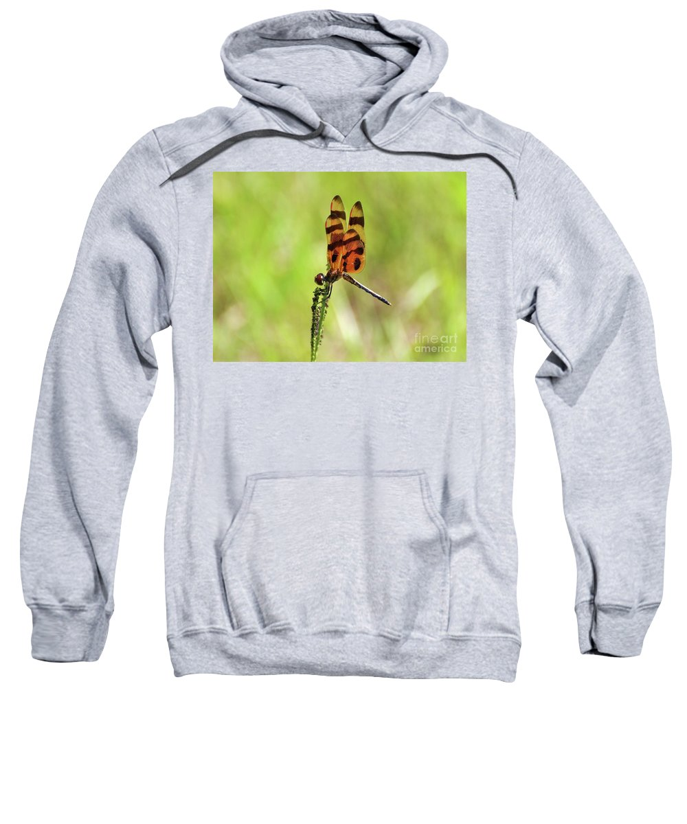 Dragonfly Sweatshirt featuring the photograph Halloween Pennant by Al Powell Photography USA