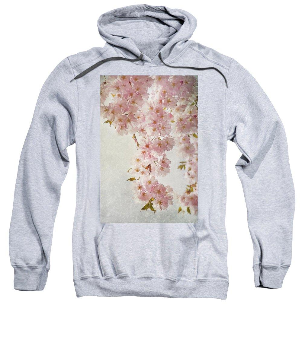Hanami Sweatshirt featuring the photograph hanami II by Claudia Moeckel