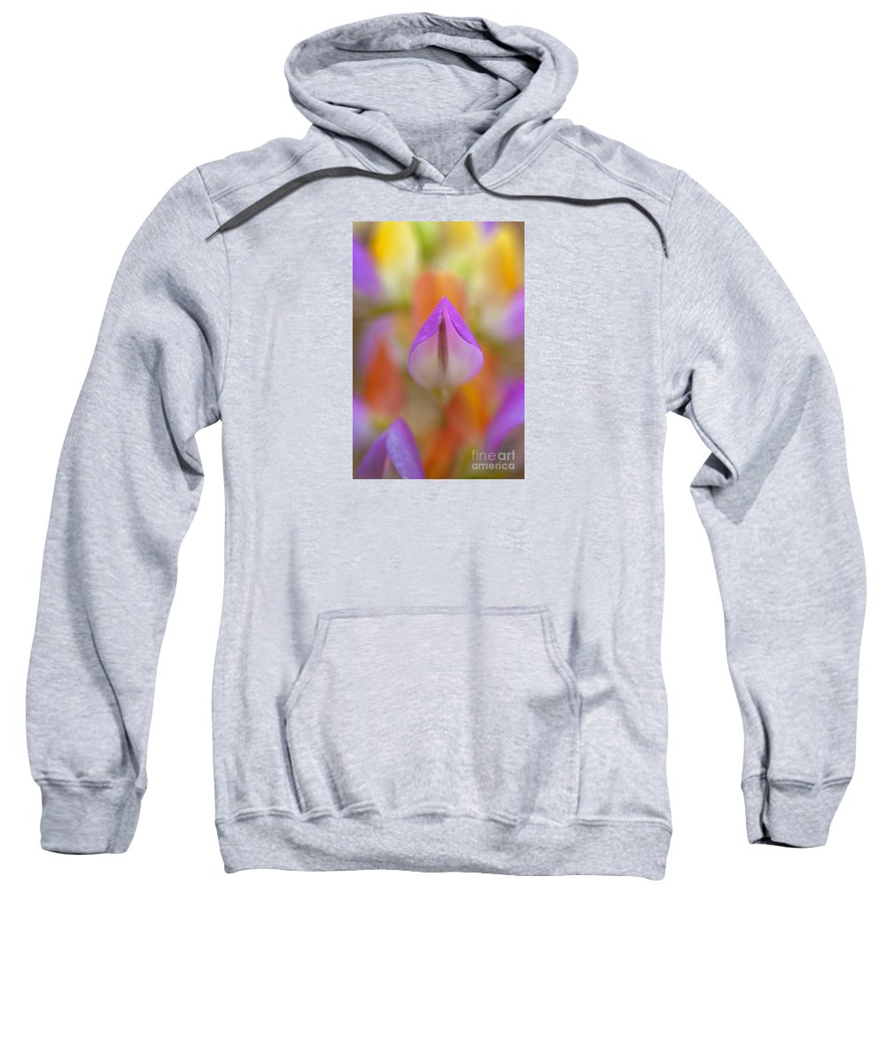 Flower Sweatshirt featuring the photograph Harlequin Lupine by Alice Cahill
