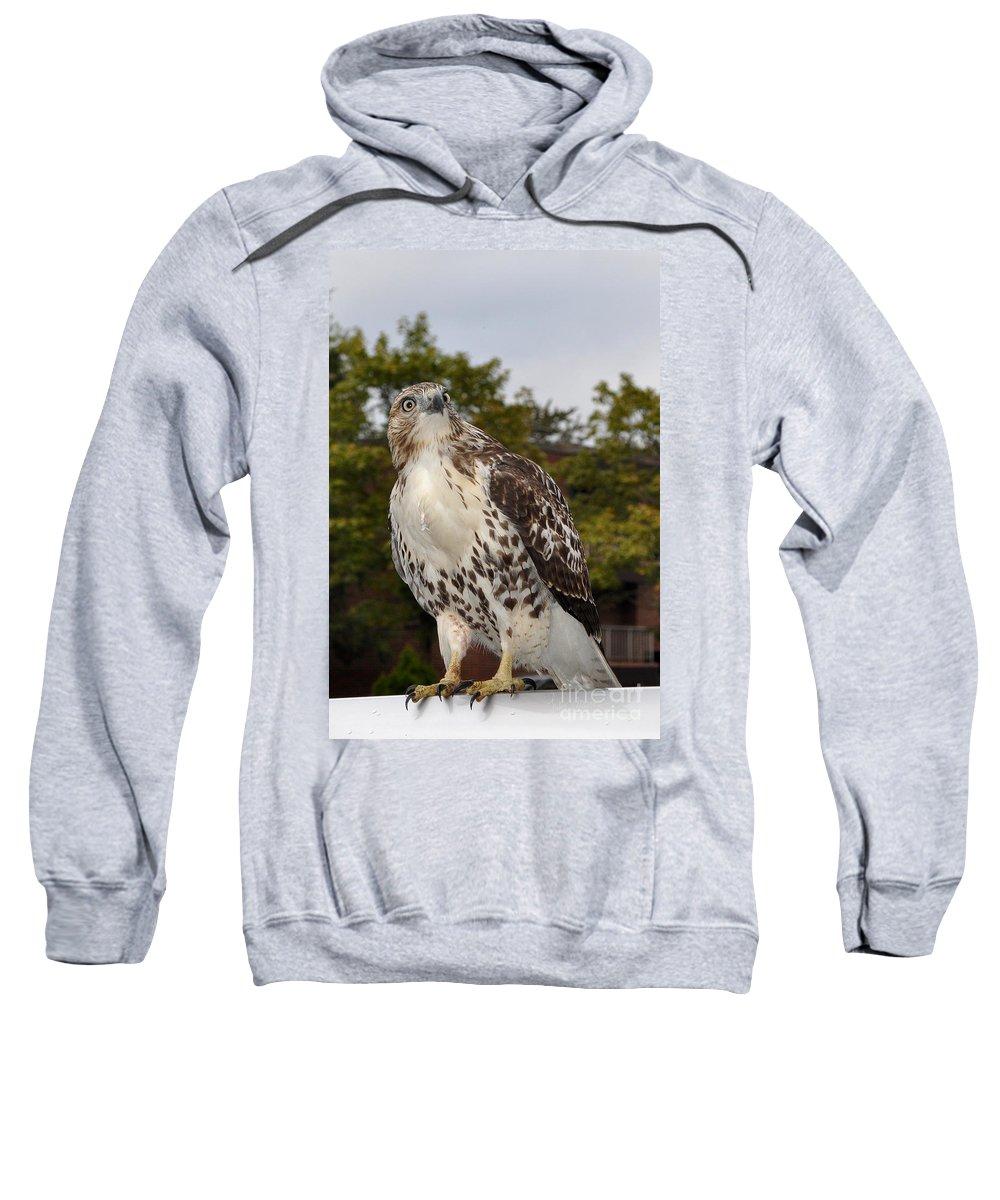 Hawk Sweatshirt featuring the photograph Hawk by Luke Moore