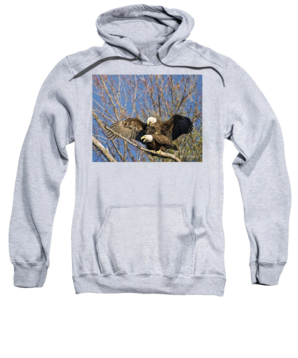 Eagles Sweatshirt featuring the photograph He Said She Said by Claudia Kuhn