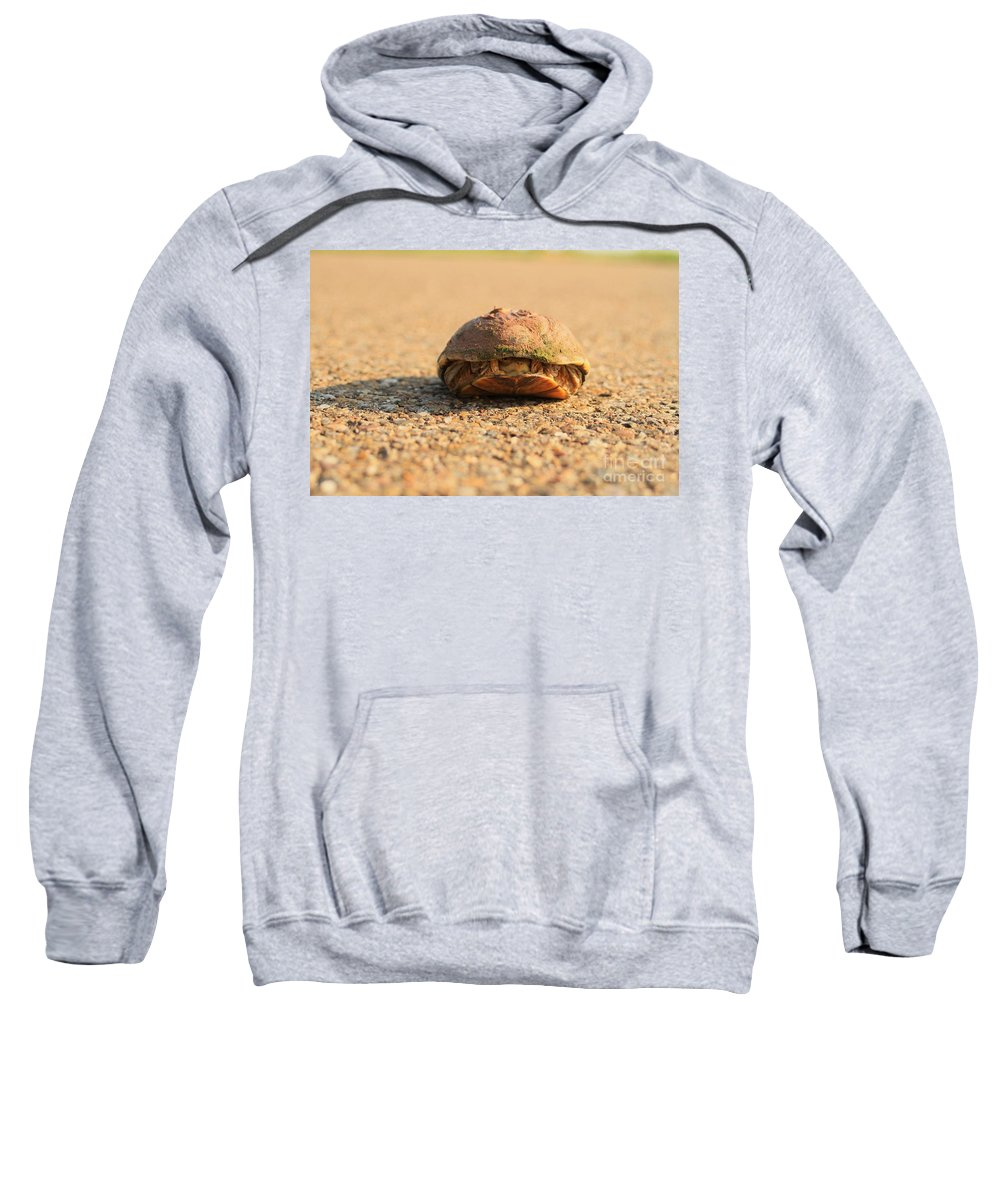 Turtle Sweatshirt featuring the photograph Hello Anyone Home by Ashley M Conger