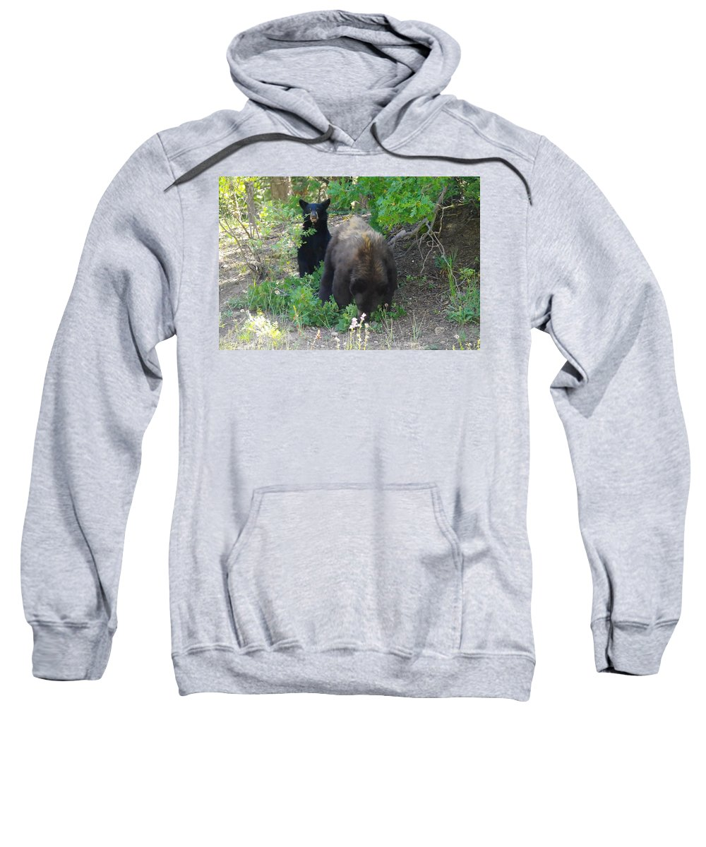 Bears Sweatshirt featuring the photograph Hey Mom Save Some For Me by Jeff Swan