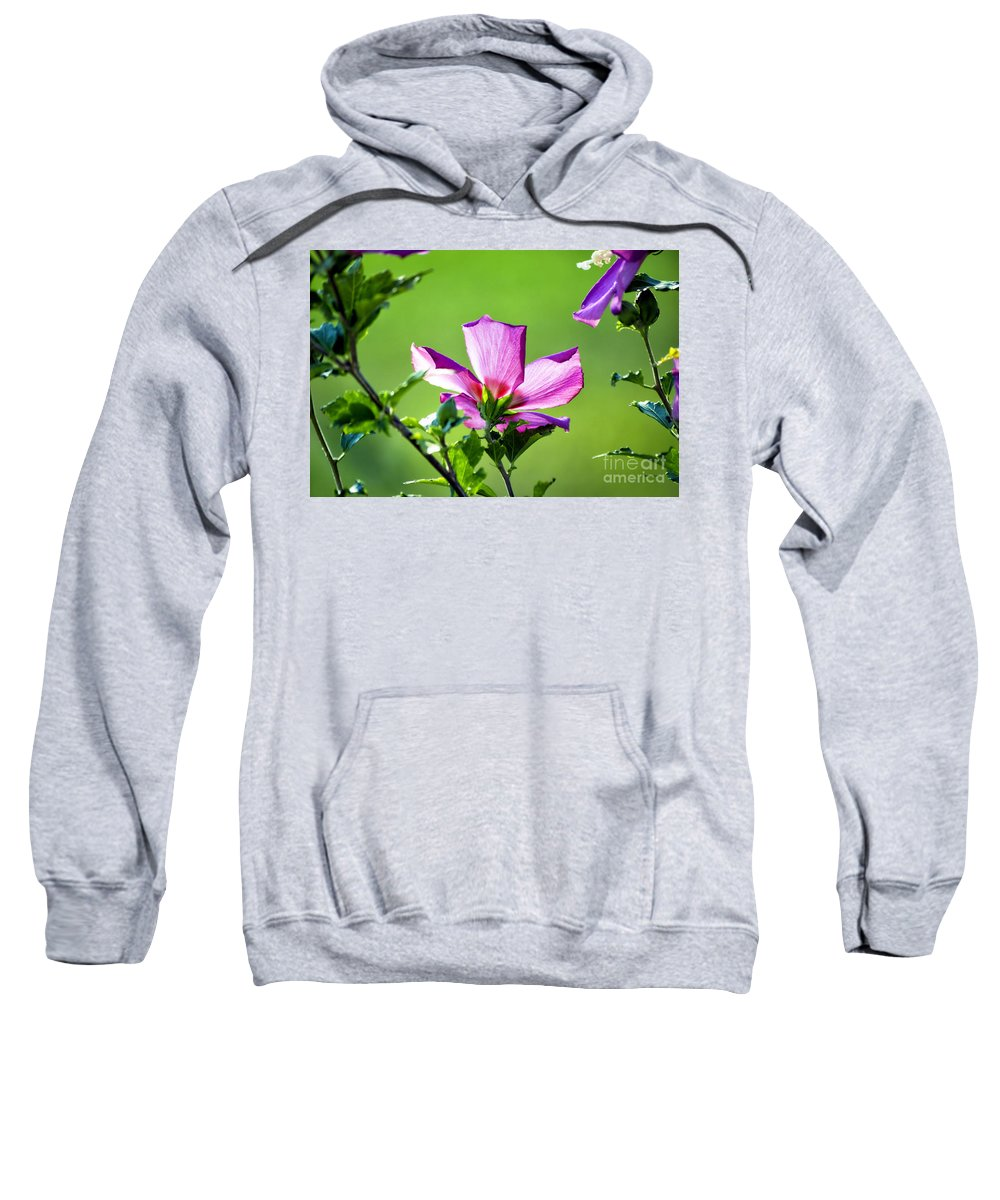 Hibiscus Sweatshirt featuring the photograph Hibiscus 04 by Thomas Woolworth