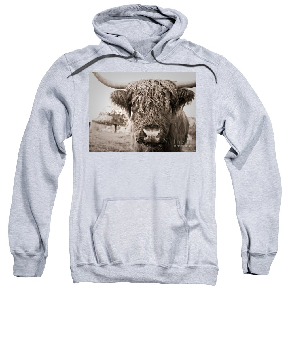 Highland Cow Sweatshirt featuring the photograph Highland Cow by Brothers Beerens