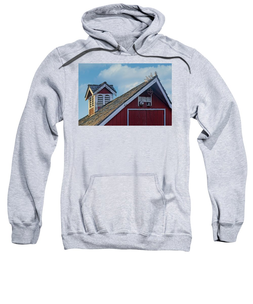Pigeon Sweatshirt featuring the photograph Home To Roost by Nikolyn McDonald