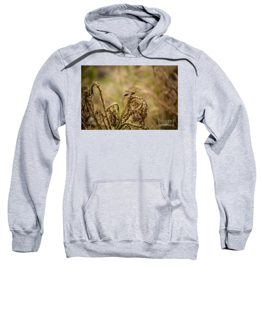 South Dakota Sweatshirt featuring the photograph Hornet And Thorn by M Dale