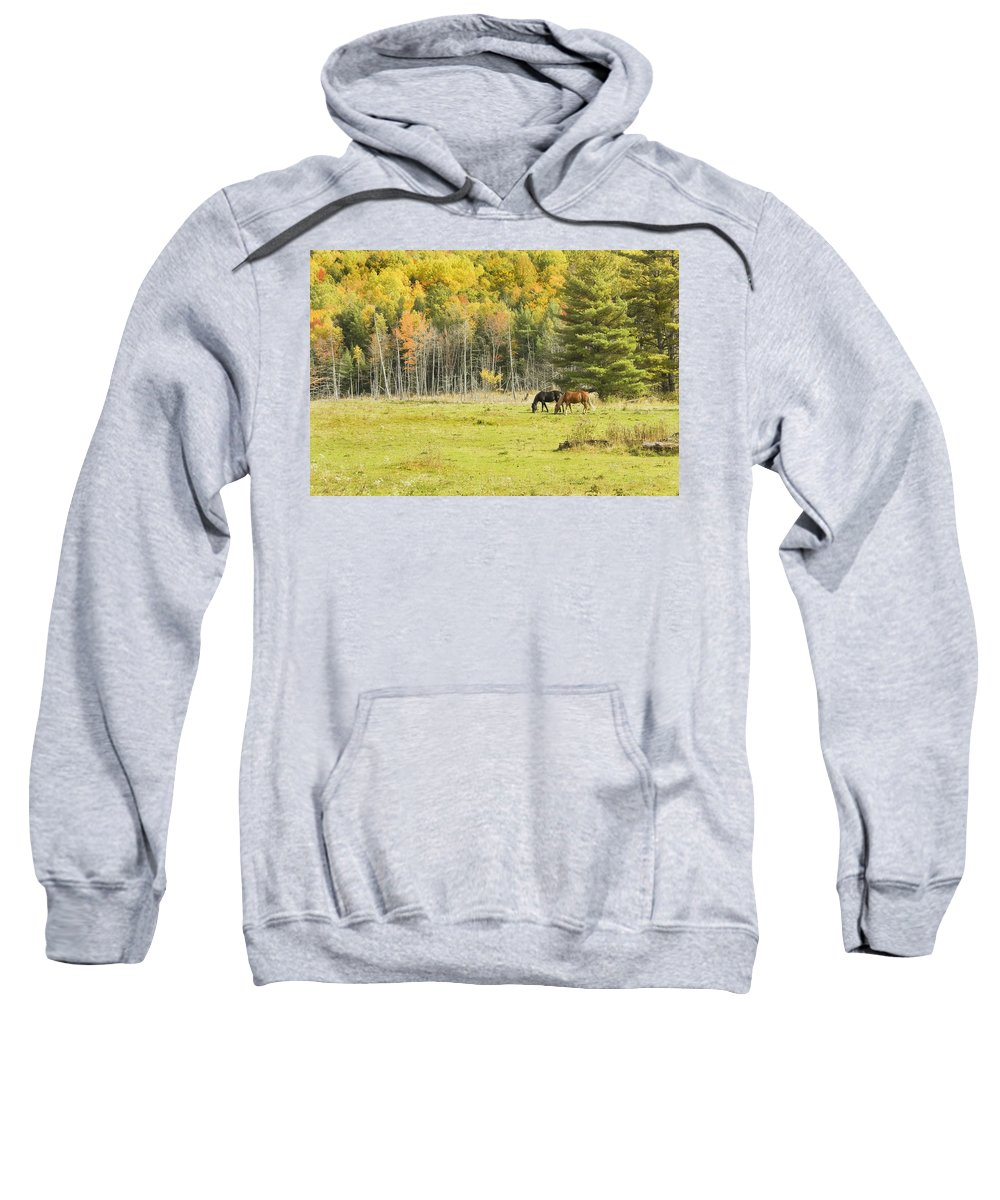 Horse Sweatshirt featuring the photograph Horse Grazing In Field Autumn Maine by Keith Webber Jr