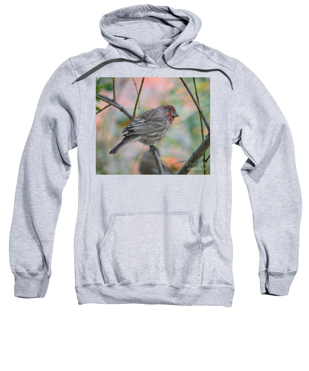 House Finch Sweatshirt featuring the photograph House Finch In Autumn by Amy Porter